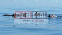 Filao Vacances : à la rencontre des dauphins