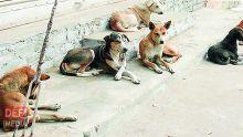 Rivière-du-Rempart : les chiens de ses voisins le rendent de mauvais poil