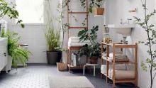 Déco : laissez les plantes vertes faire leur entrée chez vous