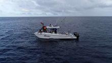 À la rencontre des cachalots et des baleines