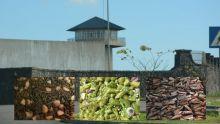 Milieu carcéral : le repas des détenus à la loupe