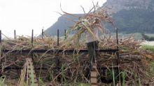 La production sucrière s'établit à 365 891 tonnes