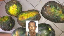 À Triolet : un pêcheur épinglé pour une série de vols de légumes