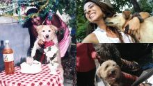Journée mondiale des chiens : pour l'amour du toutou