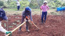 Agriculture : les jeunes et la terre