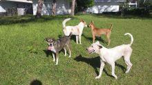 À Belle-Mare : une nouvelle clinique vise à stériliser 10 000 chiens en un an