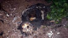 Découverte d'un squelette à Rivière-des-Anguilles : le décès remonte à six semaines