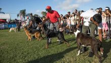 Animaux de compagnie : le show des chiens et des chats