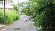 Morcellement Montréal, Coromandel : l'avenue Ylang Ylang prise d'assaut par des arbustes