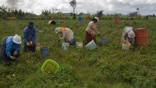 Dans le Nord : 500 arpents affectés par des coupures de la fourniture d'eau