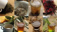 La médecine alternative : se soigner naturellement avec les plantes