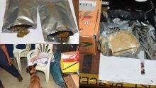 A la Poste centrale : 14 enveloppes contenant de la drogue saisies en une semaine