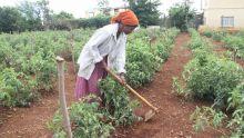 Production agricole : hausse de 16 601 tonnes en 3 ans