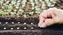 Agro-Industry: Setting up of a National plant variety and seeds office