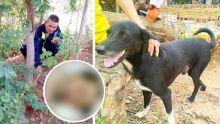 Un chien salué en héros pour avoir sauvé un bébé