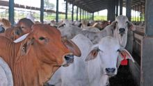 No more cattle imports from South Africa