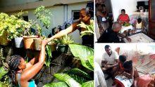 Confinement des habitants d'Olivia : papayes, bananes, 'brèdes mouroum' pour se nourrir