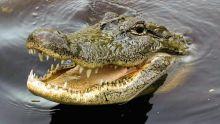 Australie : un requin entraîne une femme dans des eaux infestées de crocodiles
