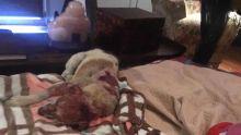 Pour avoir brulé vif un chien : un habitant de Ste-Croix activement recherché