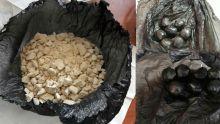 Saisie de Rs 8,5 millions de drogue chez un jeune habitant de Plaisance, Rose-Hill