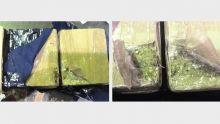 Les autorités saisissent 4 kilos de cannabis envoyés au nom d'Alvaro Sobrinho