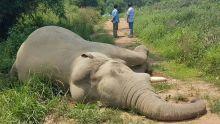 En Thaïlande, avis de recherche contre un électrocuteur d'éléphants