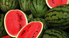 Agriculture : production juteuse de 1 400 tonnes pour le melon d'eau