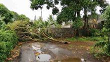 Météo : l'avis de fortes pluies maintenu jusqu'à 19 heures, encore des averses ce jeudi, prévoit la station de Vacoas