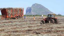 Emploi des saisonniers : le JNP s'inquiète quant au sort des ouvriers agricoles et des artisans