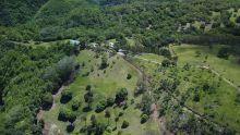 Maurice perd 93 hectares de forêt en 9 ans
