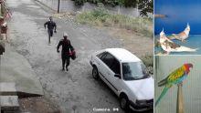 Trafic d'oiseaux : la police sur les traces d'une bande organisée