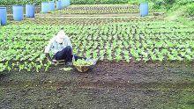 Vols dans Les cultures : les planteurs en ont ras-le-bol