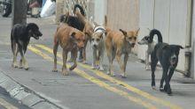 14 771 chiens errants capturés