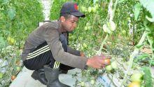 Top Nature : vers une consommation de légumes sains