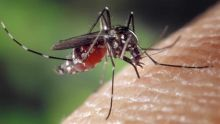 A case of malaria detected on Nigerian
