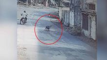 Des singes attaquent des villageois en Inde