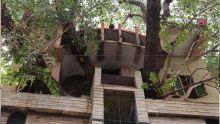 En Inde, une maison construite autour d'un arbre centenaire