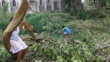 Rodrigues : des agriculteurs sinistrés auraient fait de fausses déclaration à la police
