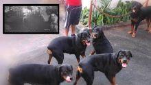 À Petit-Raffray : des Rottweilers sauvent une famille des griffes de six bandits armés