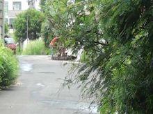 Morcellement Montréal, Coromandel : des branches chargées d'épines versées sur la voie publique