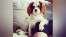 Calodyne : elle promet une forte récompense pour retrouver son chien