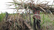 SIT envisage de produire 125 000 tonnes de sucre en Tanzanie