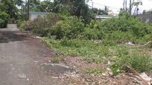 Curepipe: terrain en friche à Mootoo Lane