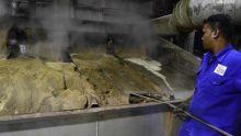 Alteo produira 100 000 tonnes de sucre au Kenya