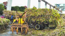 Industrie sucrière: la coupe démarre le 23 mai sur fond d'optimisme