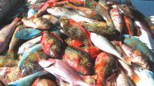 Consommation: le prix du poisson grimpe jusqu'à 37 %
