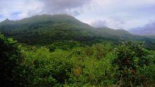Plantes menacées d'extinction : Maurice dans le top 5 mondial