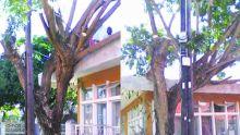 Fort Victoria, Cassis: un arbre représente un danger pour la sécurité publique