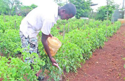 planteur-legume