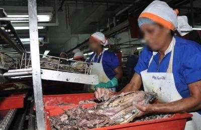 Une stagnation a été constatée au niveau  du secteur des produits de la mer.